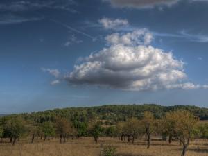 Spanien Urlaub, Olivenbäume, Spanien