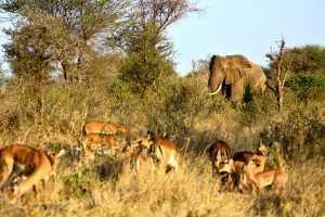 Tansania Urlaub Elefanten, Gazellen, Nationalpark Ngorongoro-Krater, Tansania
