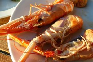 Dänemark Urlaub Lobster