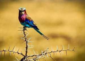 Tansania Urlaub Nationalpark Mikumi und Nationalpark Raha, Tansania