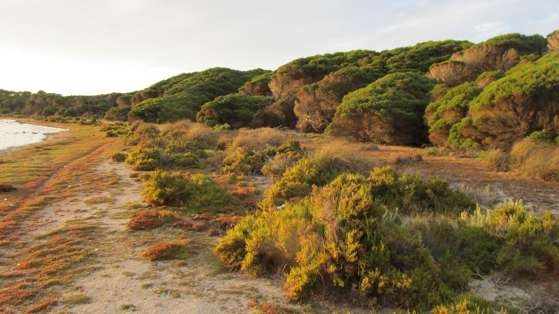 Australien Urlaub Rottnest Island, Westaustralien