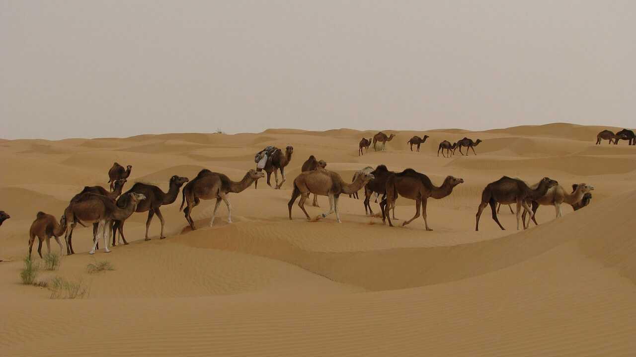 Djerba Urlaub Kamel reiten